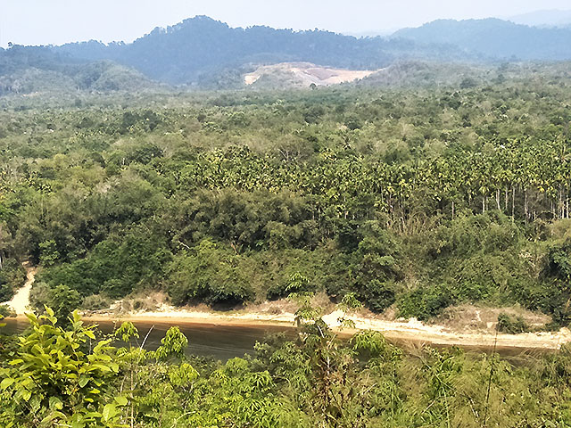 Betel nut plantation and forest in Dawei